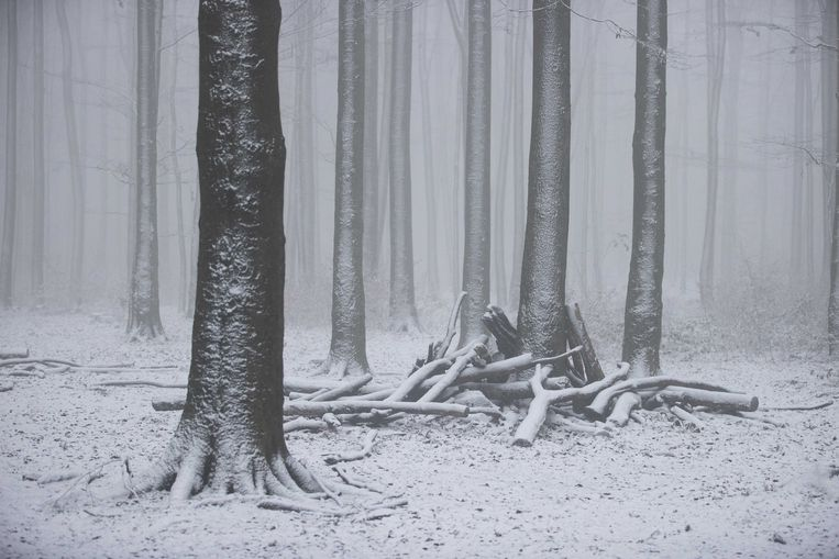 Bij het drielandenpunt in Vaals kleurden gisteren de bomen wit. Ook andere hoger gelegen delen van Limburg werden bedekt met zo'n twee centimeter sneeuw. Beeld ANP