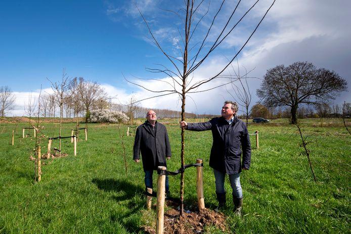 Jac Lamerichs (rechts) en Theo Janssen bij de nog jonge bomen van het eerste klimaatbosje in de gemeente Lingewaard.