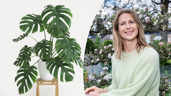 Is je orchidee uitgebloeid en verliest je ficus bladeren? Met de tips van onze tuinexperte houd je je kamerplanten mooi en gezond