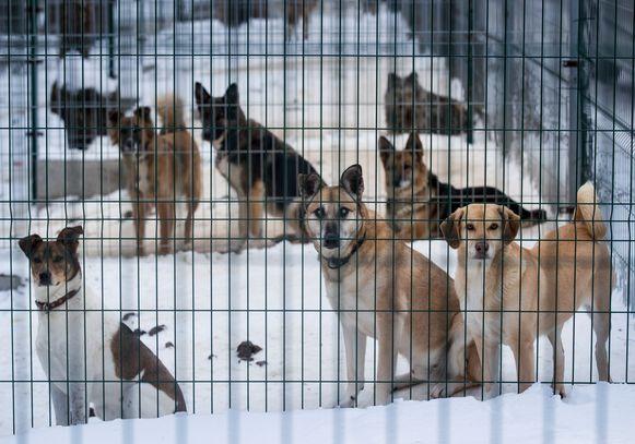 Al deze honden wachten nog op een baasje.