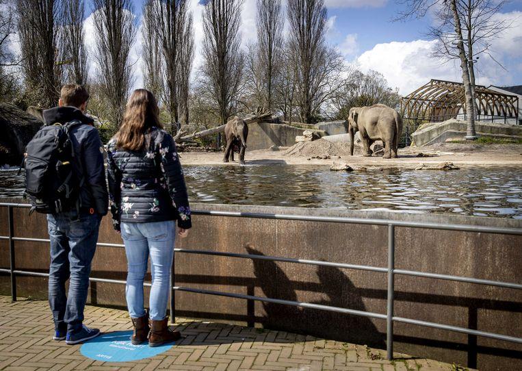2021-04-16 12:05:02 AMSTERDAM - Bezoekers bij de olifanten in dierentuin Artis. Het dierenpark opende op proef met Testen voor Toegang, waarbij mensen op vertoon van een negatieve coronatest een bezoek mochten brengen. ANP SEM VAN DER WAL Beeld ANP