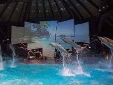 Voorstellingen Dolfinarium in Harderwijk in strijd met Europese regels: 'Maat is nu echt vol'