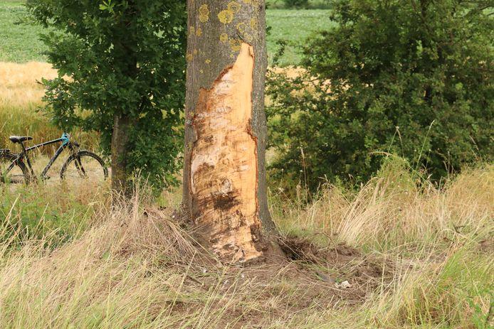 De Mercedes werd ook tegen een boom gekatapulteerd.