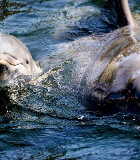 Is China dan écht de enige optie voor de Dolfinarium-dolfijnen?