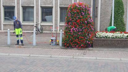 Onkruid: gemeente reageert op giftige reacties van enkele inwoners