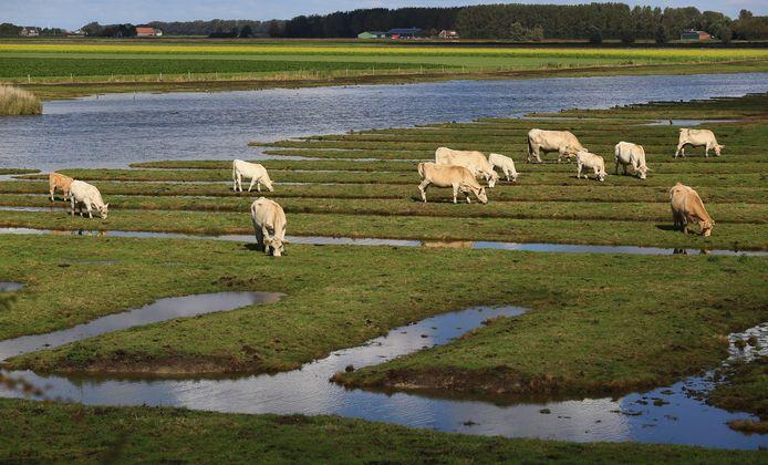 De vrees bij de VVD is dat er straks niets mag worden veranderd op Goeree-Overflakkee omdat het eiland een beschermde natuurstatus heeft.