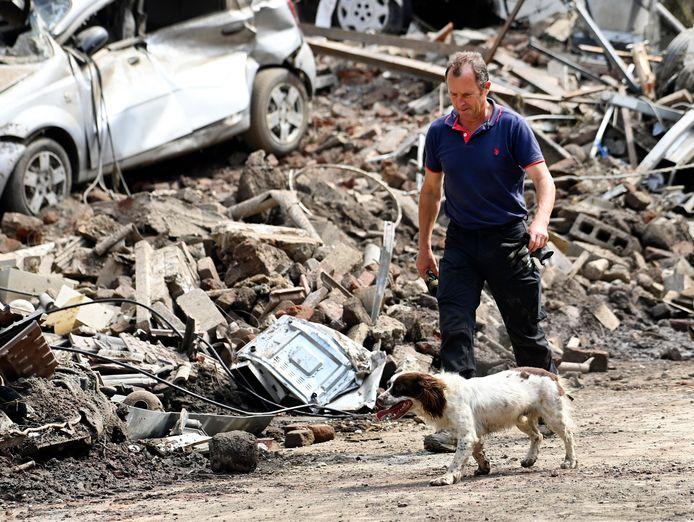 Image d'illustration. Les propriétaires d'animaux des zones sinistrées rencontrent des difficultés pour retrouver leur animal de compagnie.