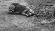 """GAIA strijdt met aangrijpende documentaire tegen broodfok: """"Ga liever langs bij overvolle dierenasielen"""""""