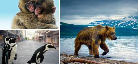 Voyagez et découvrez le monde depuis chez vous grâce à ces quatre documentaires