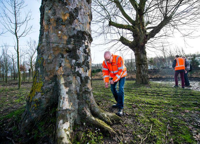 Ook het bomendepot van de stadskwekerij in Rotterdam-Kralingen verhuist mee naar de nieuwe locatie op bedrijventerrein  Zestienhoven.