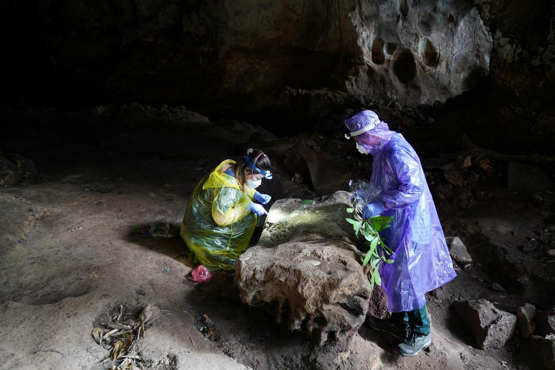 Onderzoekers van het Pasteur Instituut verzamelen uitwerpselen van vleermuizen in een grot op de Chhangauk-heuvel in Laos.  Beeld REUTERS