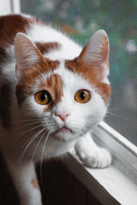 Bizarre rechtszaak: Rotterdammer (32) zou zeven katten gruwelijk hebben gemarteld
