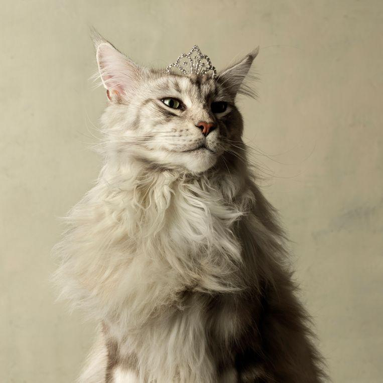Een portret uit de 'Majestic'-serie van fotografe Marie Cécile Thijs, te bewonderen op de expo 'Kattenliefde'. Beeld Marie Cecile Thijs