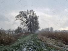 Het blijft lente ondanks de sneeuw: 'De broeddrang is zo groot dat zomervogels de kou trotseren'