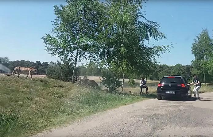 Franse toeristen stappen uit de auto tijdens safari Beekse Bergen.