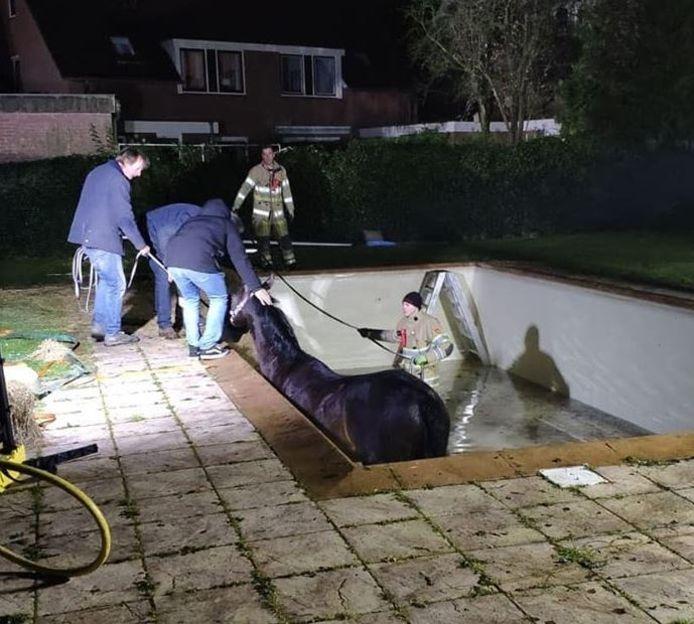 De brandweer heeft in Doorn een paard uit een zwembad gered.