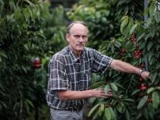 Bert (65) kweekt zwarte frambozen: 'Goed tegen kanker, maar vooral lekker'