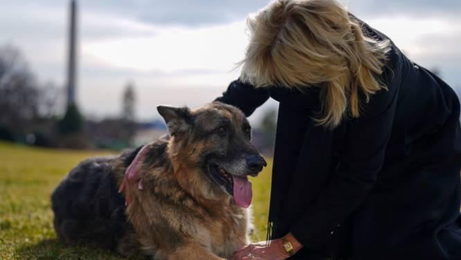 Ook Champ en Major, de honden van de Bidens, hebben hun intrek in het Witte Huis genomen