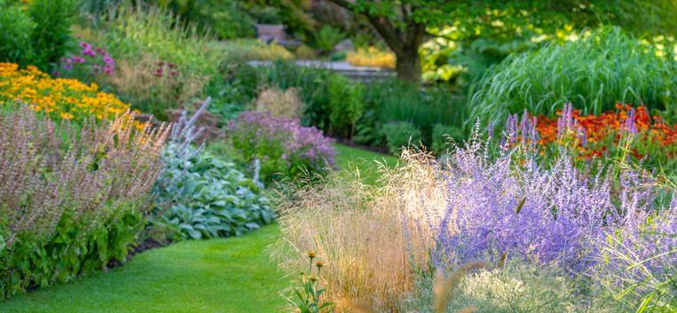 Super Ook zonder zon een bloeiende tuin: 16x de mooiste schaduwplanten RF-64