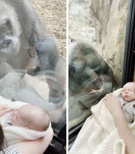 Un singe admire un nouveau-né à travers la fenêtre d'un zoo