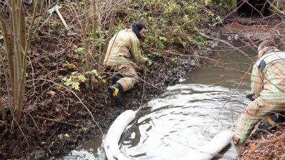 Duizenden liters mazout vervuilen niet alleen Maarkebeek, maar ook grote hoeveelheid grond