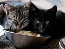 """Un chat """"enragé"""" et contaminé par un virus rare inquiète la Toscane"""