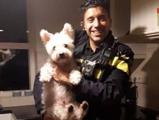 """Dankzij hondje Frodo drie inbrekers ingerekend in Nederlandse stad: """"Prettige dierendag kleine grote vriend"""""""