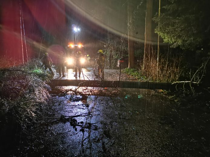 Een boom is gevallen op de Heimanslaan in Wageningen.