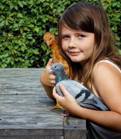 Fien (11) heeft kip Mosterd met als ouders twee postduiven; kan het nóg gekker?