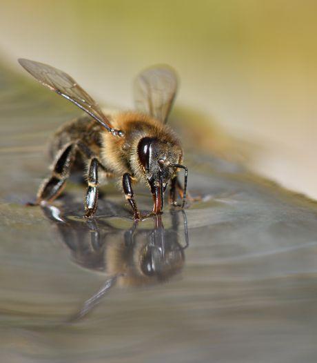 Blèèèh corona! Wageningen leert bijen hun tong uit te steken als ze Covid-19 ruiken