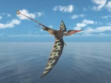 Wetenschappers ontdekken fossiele 'vliegende draak' in Chileense woestijn