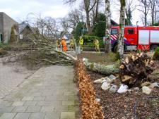 Windstoten tot 124 km/uur: storm blaast bomen en vrachtwagens om, chaos in Oost-Nederland