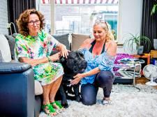 Baasje zieke hond in zak en as: geen geld voor operatie
