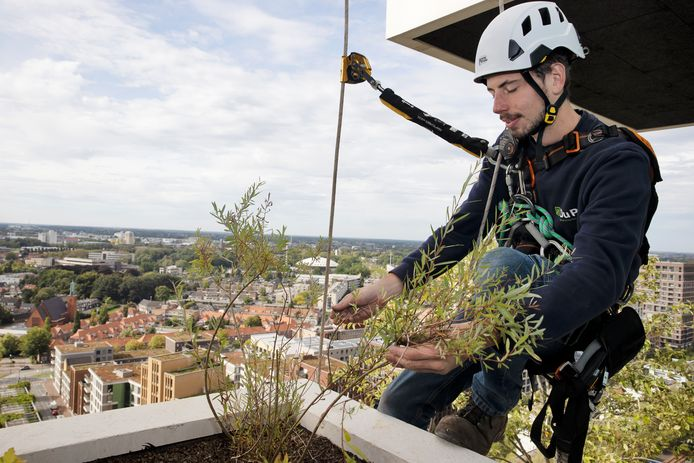 Eindhoven ED2021-13761 De groene Trudo Toren is klaar en bewoond. Abseilende tuinmannen onderhouden het groen. Hier op de 17e etage