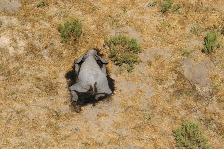 De olifanten stierven heel snel, vaak staand, en zakten daarna door hun knieën in elkaar. Beeld Reuters via REUTERS