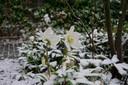 Hierbij een foto van de eerste sneeuw. Genomen in de tuin van Loura Keijzer