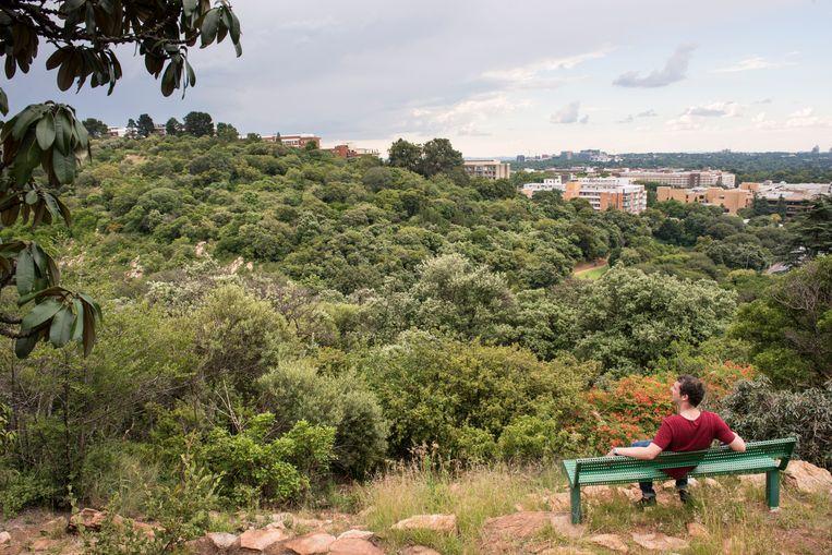 Het natuurreservaat The Wilds in Johannesburg bestaat uit twee heuvels die doorsneden worden door een ringweg.  Beeld Bram Lammers