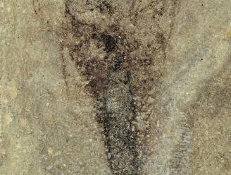 Oudste volledig fossiel van insect blijkt 'missing link'