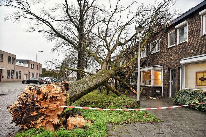 Boom tegen woningen Kaptein Nemostraat Tilburg.