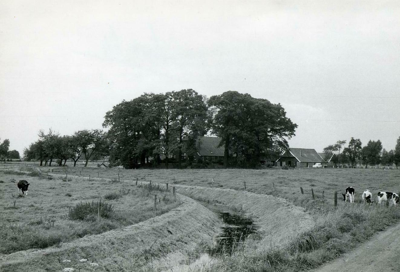Erve Hondeborg in Zenderen in 1964.