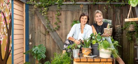 Plantenasiel voor pleegplantjes, ficusweesjes en ander groen spul zonder eigenaar