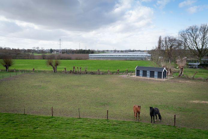 Het beoogde groen tussen de Waaldijk en Zandsestraat voor een woonwijkje.