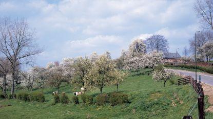 Actieplan moet hoogstamboomgaarden in ere herstellen