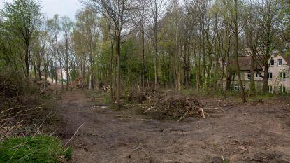 """Zonder vergunning gevelde bomen  moeten niet herplant worden in woongebied : """"Nogal zinloos""""."""