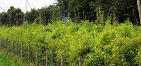 'Experiment plantenscherm bij Eindhoven Airport wél zinvol'