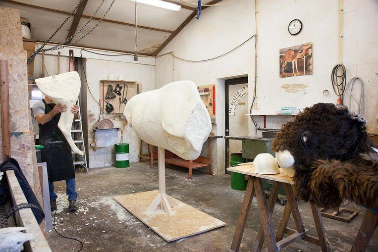 De geprepareerde huid wordt in de werkplaats met lijm aangebracht op een model van hardschuim en met naalden op zijn plek gehouden. Beeld Theo Audenaerd
