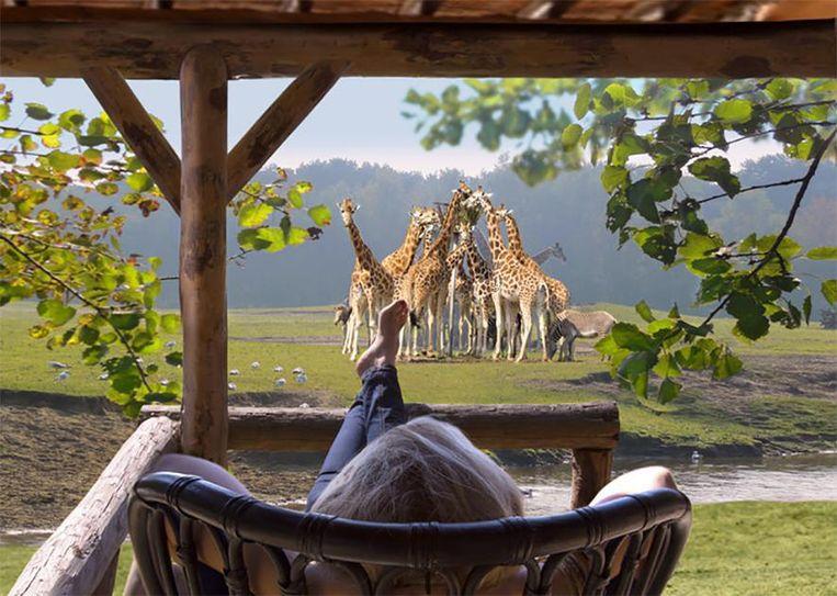 Een impressie van een van de lodges in het nieuwe Safari Resort. Beeld Libéma