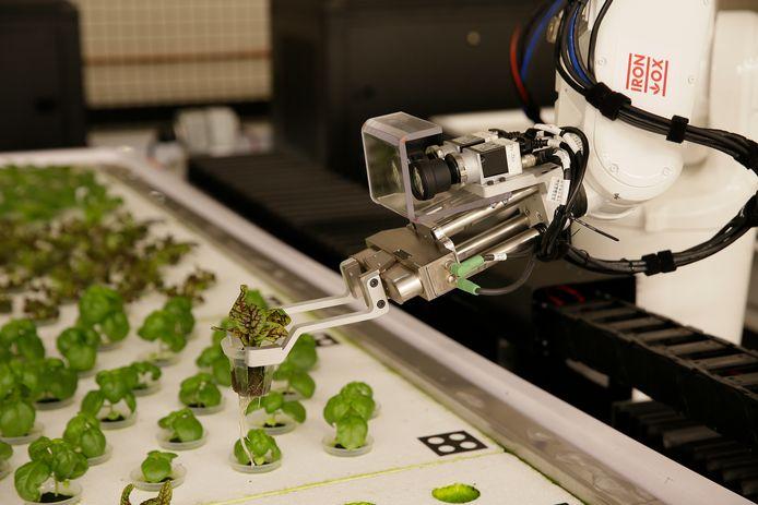 Archiefbeeld: indoor boerderij met met robot in San Carlos
