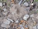 Het holletje van de larve van een mierenleeuw.
