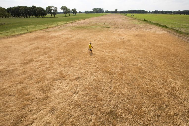 Een perceel met verdroogd gras in Lievelde. Beeld ANP